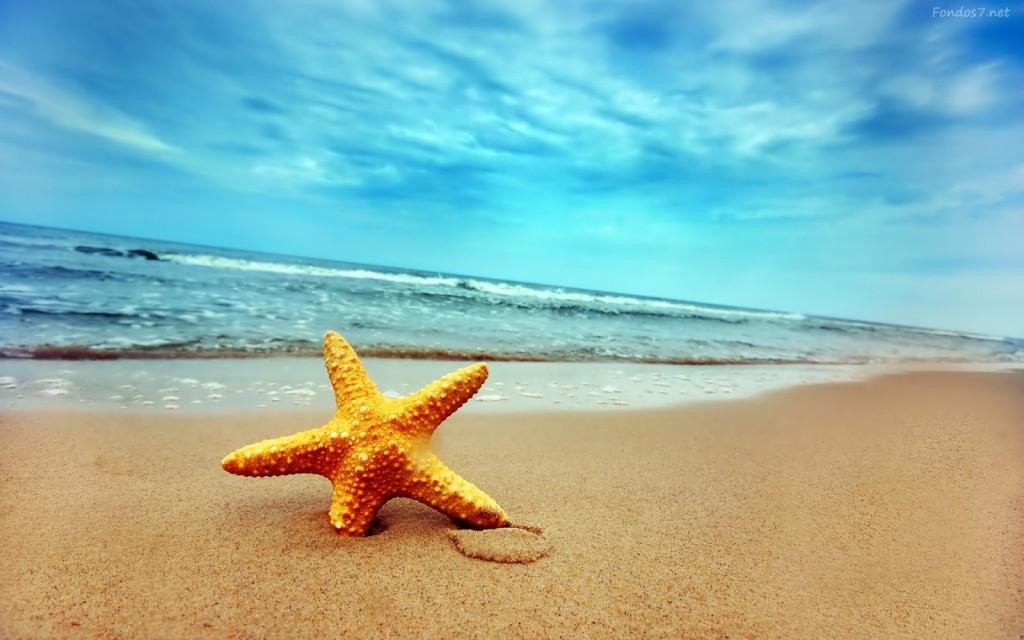 estrella-de-mar-en-la-playa